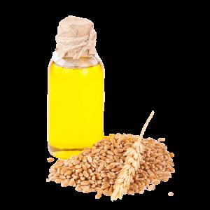 Buğday Yağı